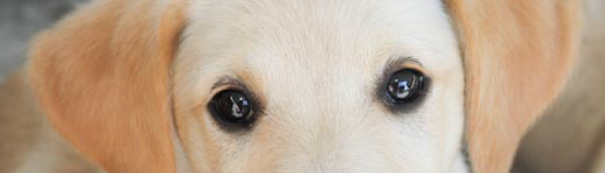 Puppy 16-605x173.png